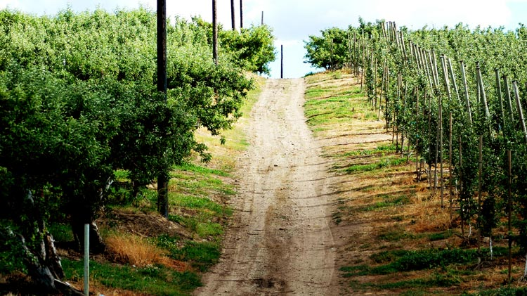 Gilbert Cellar's gravel road