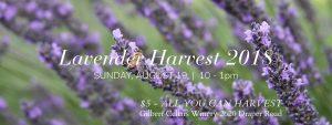 Lavender Harvest 2018